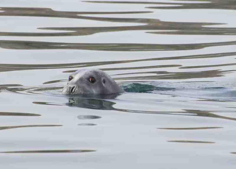 seal small